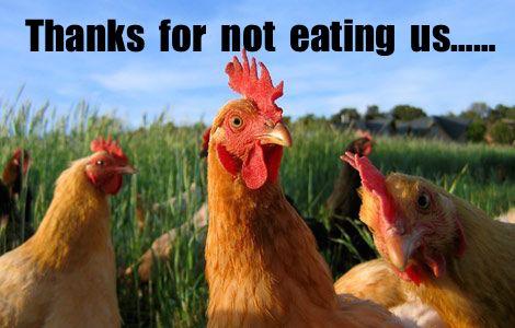 Name:  chickens.jpg Views: 189 Size:  36.5 KB