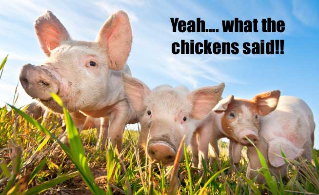 Click image for larger version  Name:farm-animals.jpg Views:90 Size:47.6 KB ID:12841