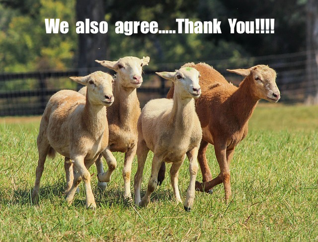Click image for larger version  Name:goats-191788_640.jpg Views:83 Size:151.6 KB ID:12857