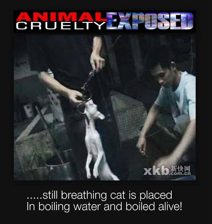 Cats boiled alive in China – Vegetarian Friend